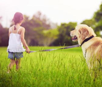 Girl-walking-dog-147707214-lc081512