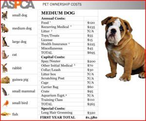 medium-dog1