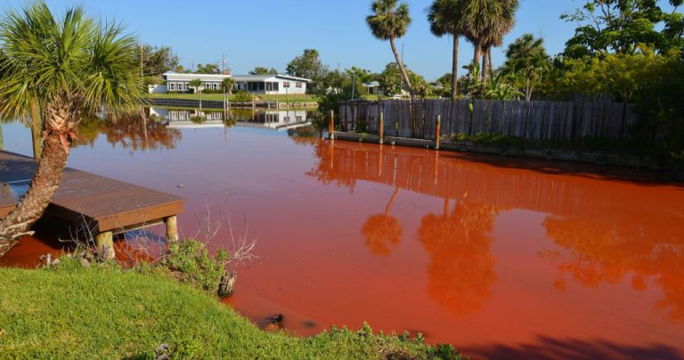 Algae Plagues Florida Beaches and Waterways