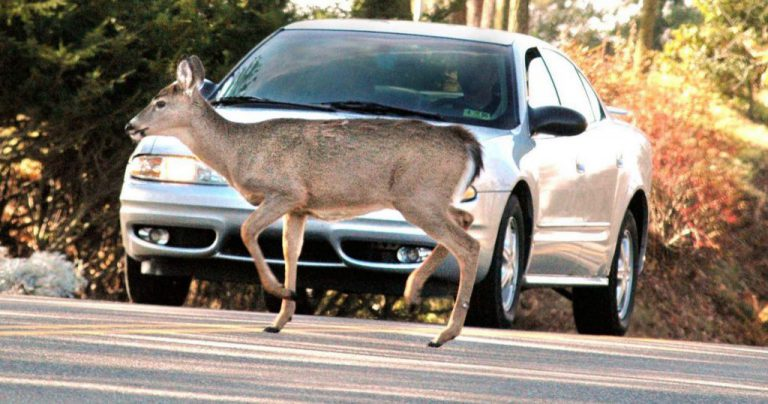 How to Avoid Hitting a Deer this Fall