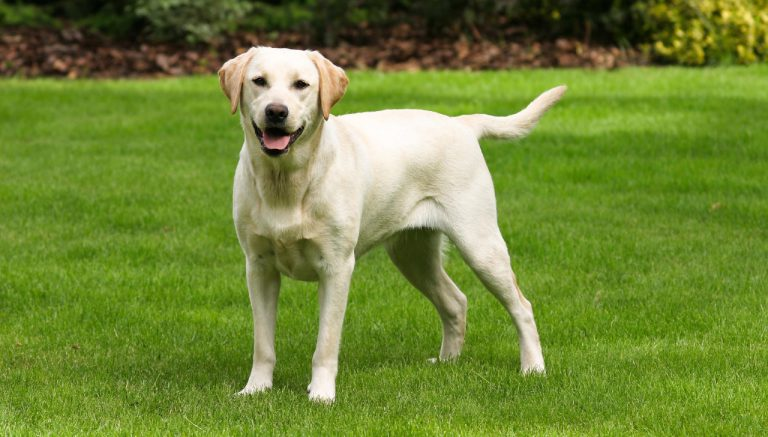 The Doggone Problem of Dog Bites